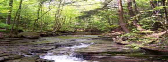 The stream flowing through the forest nurishing the trees!